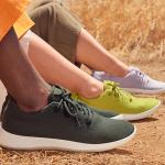 allbirds nachhaltige sneaker