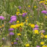 nachhaltige geschenke: Blühpatenschaft