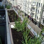 insektenfreundliche balkonblumen