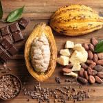schokolade workshop